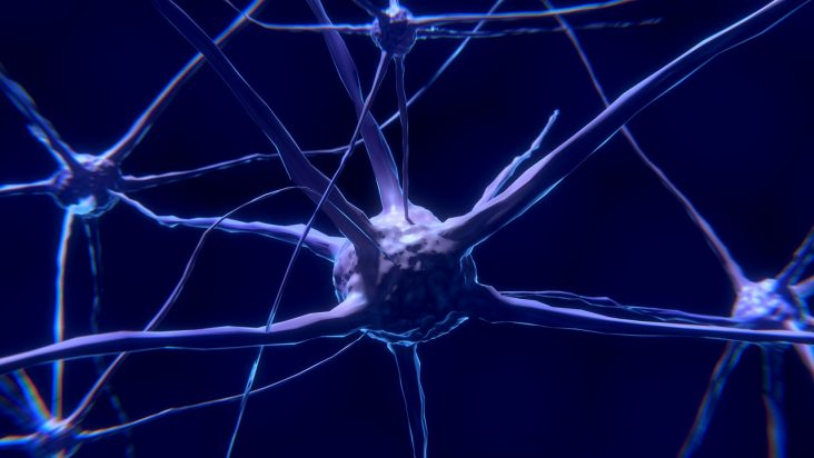 celule stem neurale