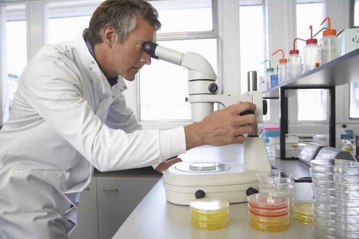 transplant celule stem